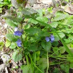 Pflanzen Frühling (3)